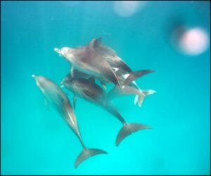 Dolphins Communicating